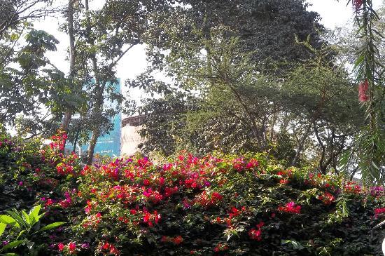 Sentrim Nairobi Boulevard Hotel: The gardens