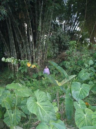 Arajuno Jungle Lodge: Bamboo growing on Tom's property