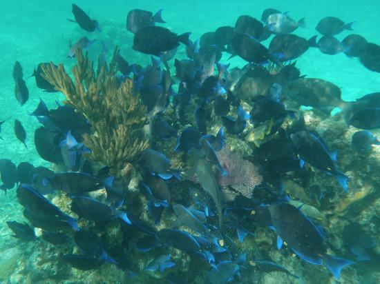 Scuba School And Family Dive Center: School of Blue Tang