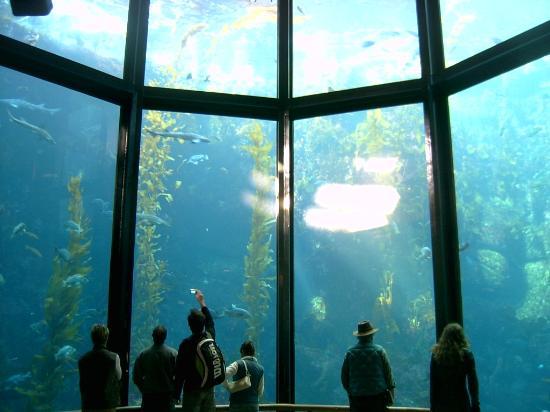 Aqu Rio Picture Of Monterey Bay Aquarium Monterey