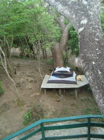 Ailanto Mountain Reserve: A view of our camp site from the tree with meditation and yoga platforms