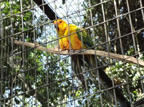 Parque das Aves: Olhe que maravilha