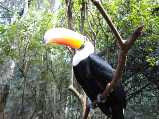 Parque das Aves: Foi ele quem me chamou.