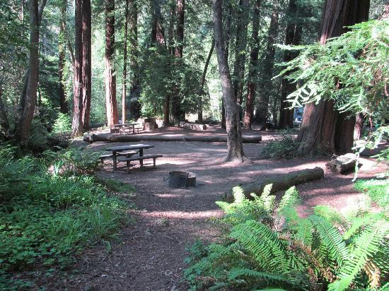 Big Sur Campground & Cabins: Shady camp site