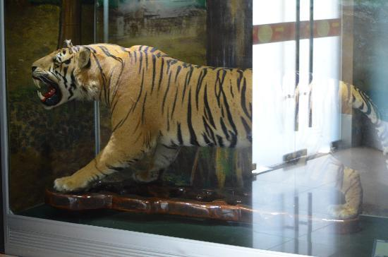 Army Museum: nice tiger sample..real one!