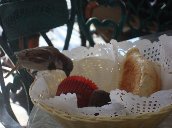Zócalo Central: Un invitado extra desayunando en la terraza del hotel