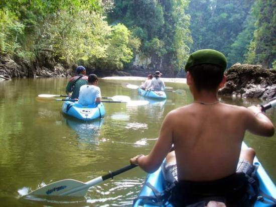 Krabi Kayak: going through the mangrove forest