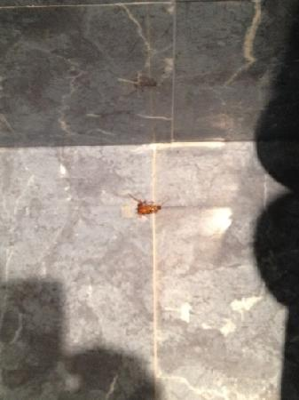 Meliá Atlanterra: cucaracha en baño