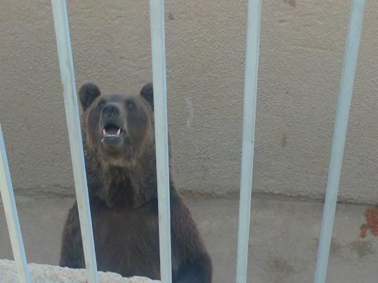 Riyadh Zoo: Bear Close Up