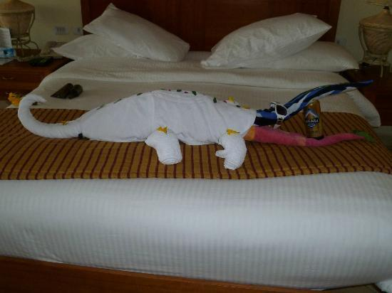 Coral Sea Waterworld Resort: A local in the room !!
