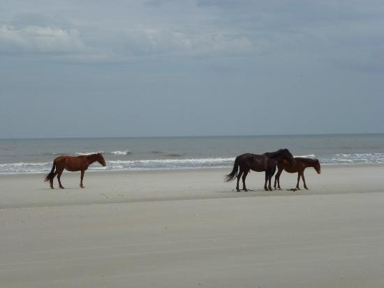 Cumberland Island National Seashore: wild horses on the beach