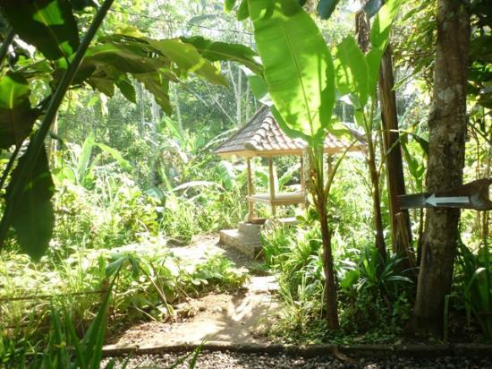 Coffee plantation - Picture of Bali On Bike, Ubud ...