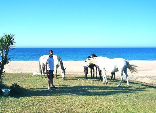 Bolonia, España: Íto y sus caballos ...