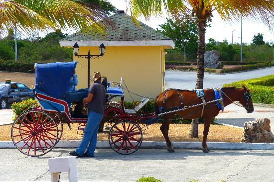Hotel Playa Costa Verde: Our Horse And Carriage We Hired