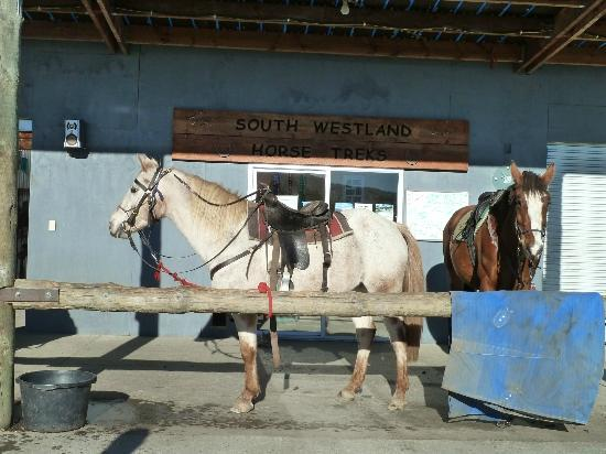 Glacier Country Horses : The stable