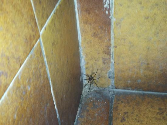 Trabolgan, Ireland: Filthy tiles & spider sitting area
