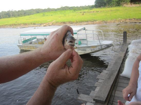 Pousada Manaus: Piranhas selbst gefangen