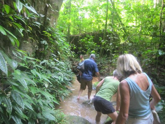 Pousada Manaus: Wanderung durch den Regenwald