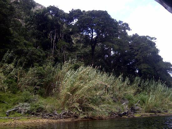 Keurbooms River Ferries: The Forest Trees....wow