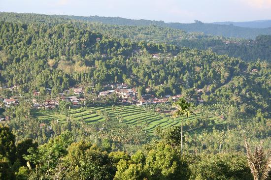 Aditya Homestay: The view from Aditya Home Stay, Munduk