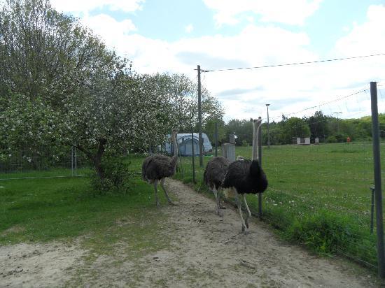 Hotel und Reiterhof an der Talsperre: auf dem Gelände befinden sich Strauße, Pferde, Kaninchen, Katzen , Ziegen ein Hund und auch ein