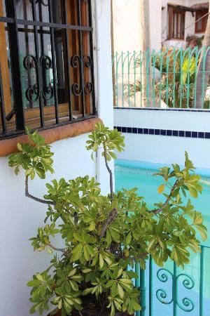 Villa Casa Nicte: Nice plants around the property.