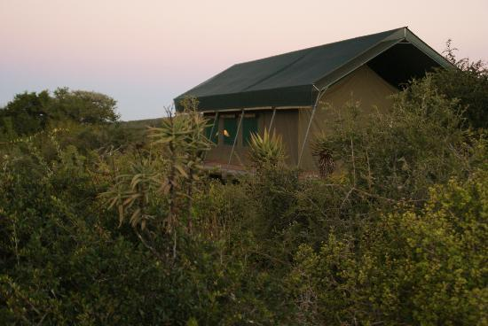Bucklands Private Game Reserve: Our luxury tent