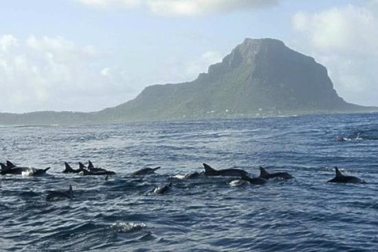 Sands Suites Resort & Spa: les dauphins!