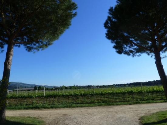 Agriturismo I Mori Gelsi : dal cancello