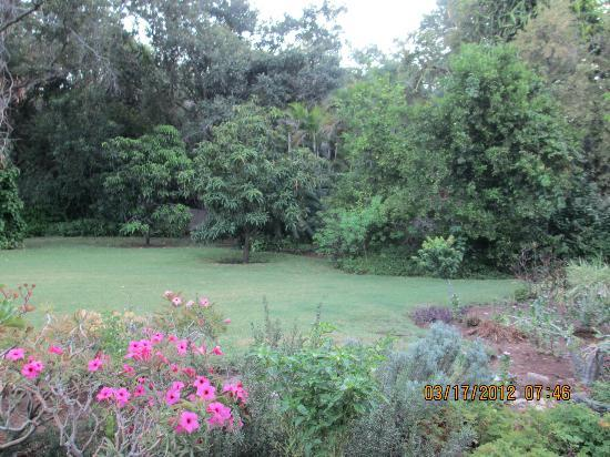 Arimagham Guest House: Backyard