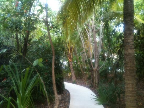 Sotavento Hotel & Yacht Club: Garden