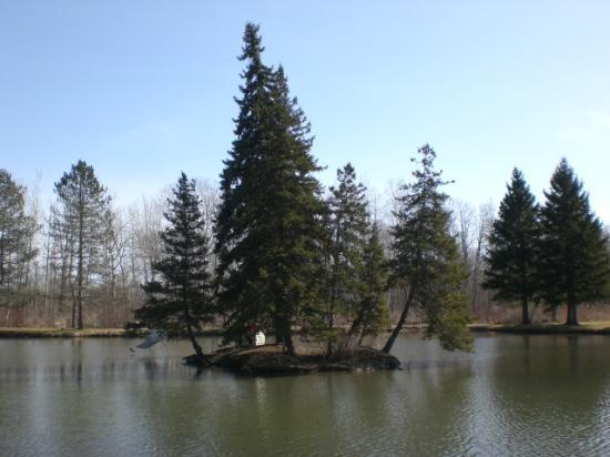 Mayville, Νέα Υόρκη: Public Pond