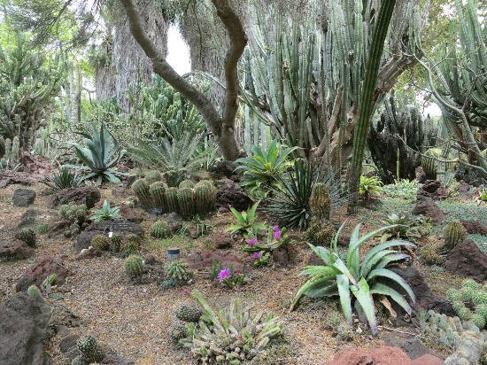 The Huntington Library, Art Collections and Botanical Gardens: cactus garden