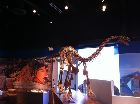 Fundy Geological Museum: replica of a skeleton