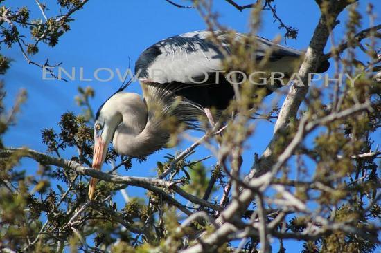 Peace River Wildlife Center: Mating ritual
