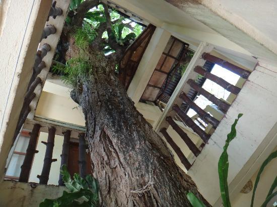 Taramindu Beach Garden Inn: Taramindu, the 80-year old Tamarind Tree