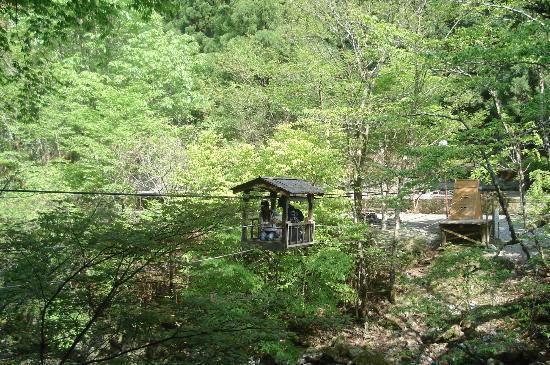 Miyoshi, Japón: 野猿