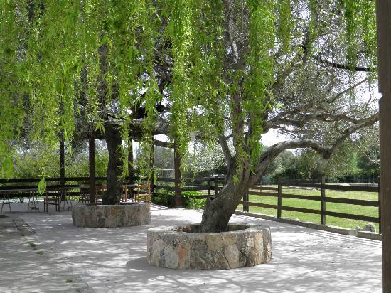 AGRITURISMO SU CUILE: Veranda esterna con tavolate e panche