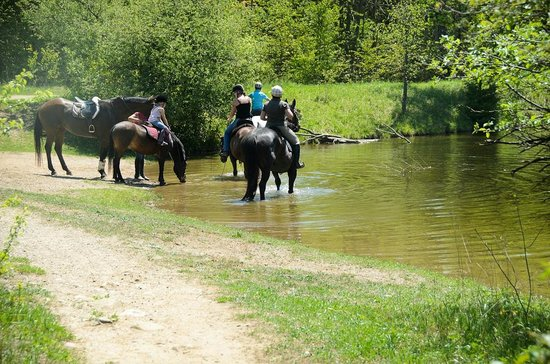 Orangeville, Canadá: Horses resting along the way