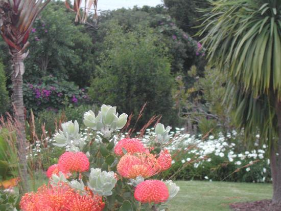 Cambalala: Nice garden