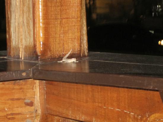 Ye Olde Buffalo Tavern : A friendly visit