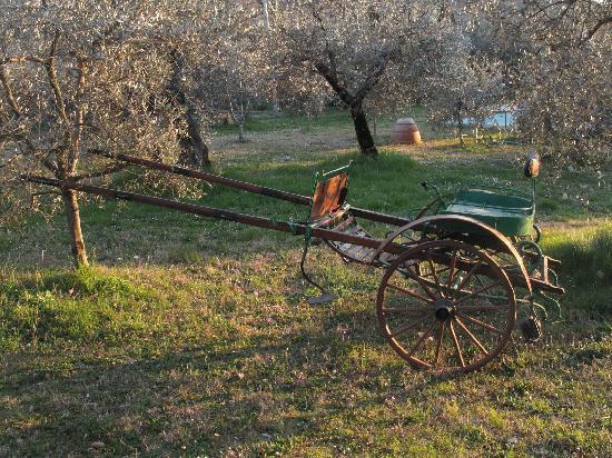 Agriturismo Filettro: il nostro calesse
