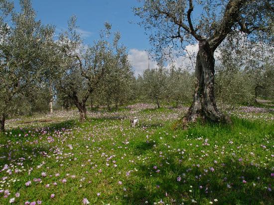 Agriturismo Filettro: olivi