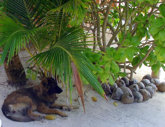 Hotel CalaLuna Tulum: A friendly local enjoying a treat