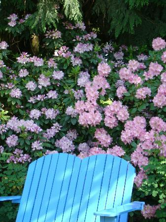 Schreiner's Iris Gardens : Rhodie with chair in front - place to sit and read and SMELL the flowers......