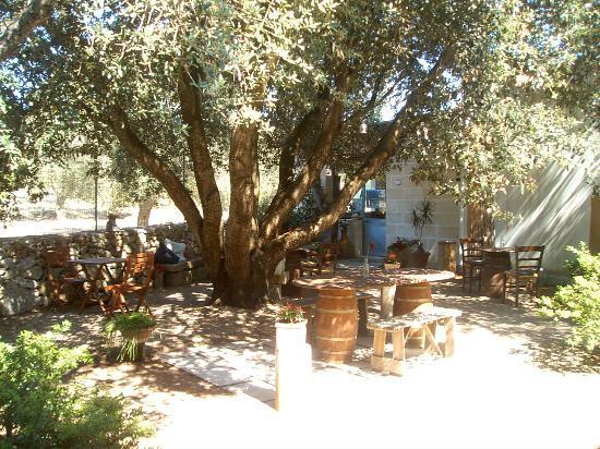 Alba B&B : Zona ristorazione