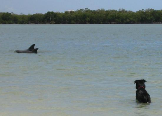 Dog Beach : Blue spying the dolphins