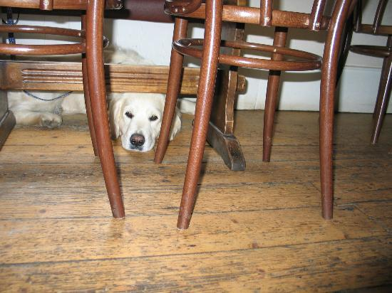 Colintraive Hotel: Grateful Dogs allowed in the Bar