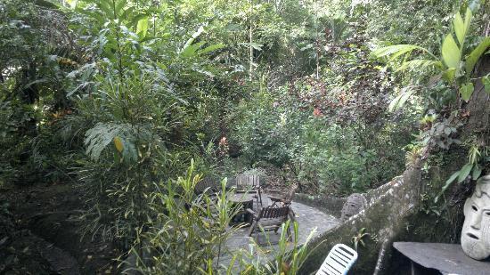 Congo Bongo Boutique Guest Houses: Naturaleza