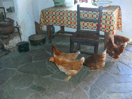 Dan O'Hara's Homestead Farm: Chickens in Dan O'Hara's cottage